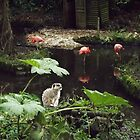 Meercat out with the Flamingos by jamluc