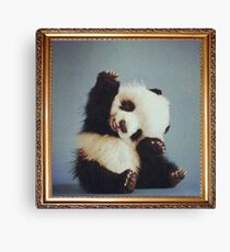 Cute Animal Pictures #1 Canvas Print