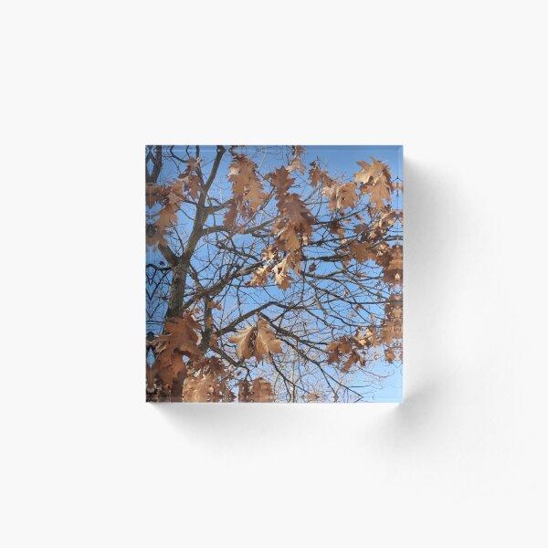 Dry autumn leaves on the tree Acrylic Block