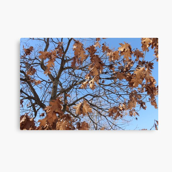 Dry autumn leaves on the tree Canvas Print