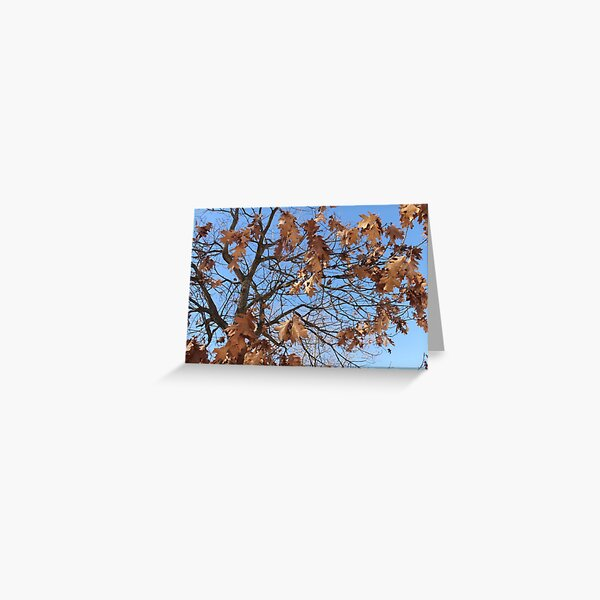 Dry autumn leaves on the tree Greeting Card