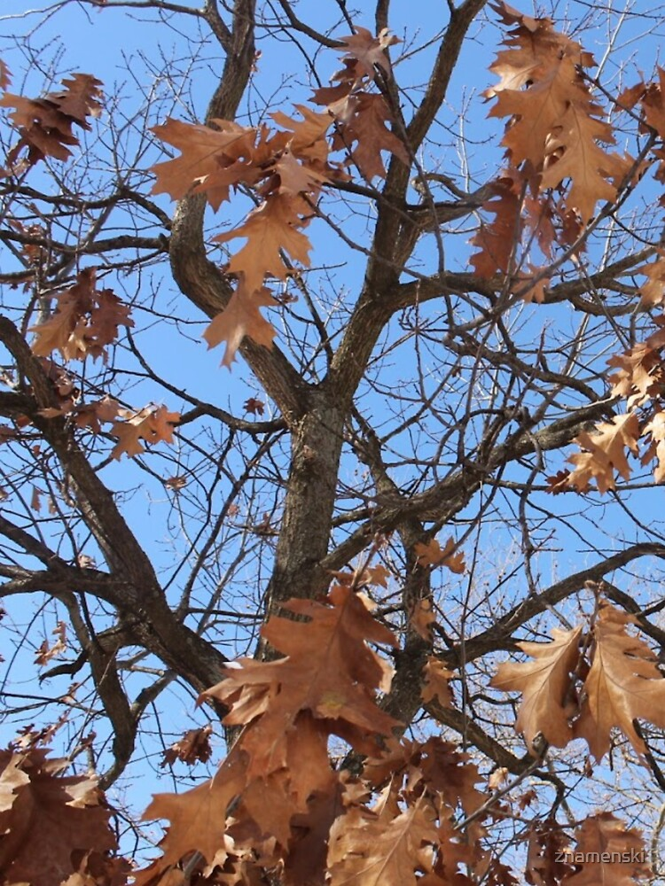 Dry autumn leaves on the tree by znamenski