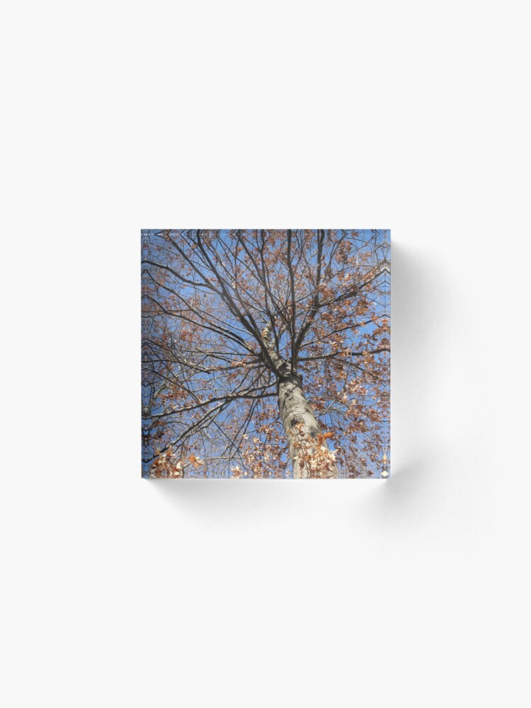 Alternate view of Dry autumn leaves on the tree Acrylic Block