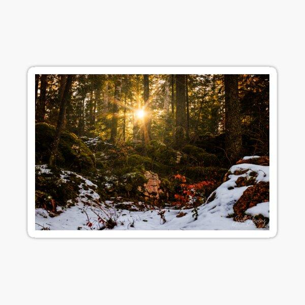 Winter sun through the trees Sticker