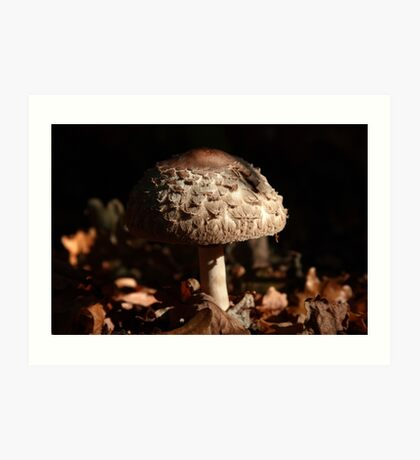 Focus on the Forest Floor Art Print