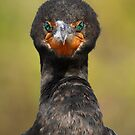 Cormorant Attitude by WorldDesign