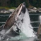 Humpback Whales Breaching by WorldDesign