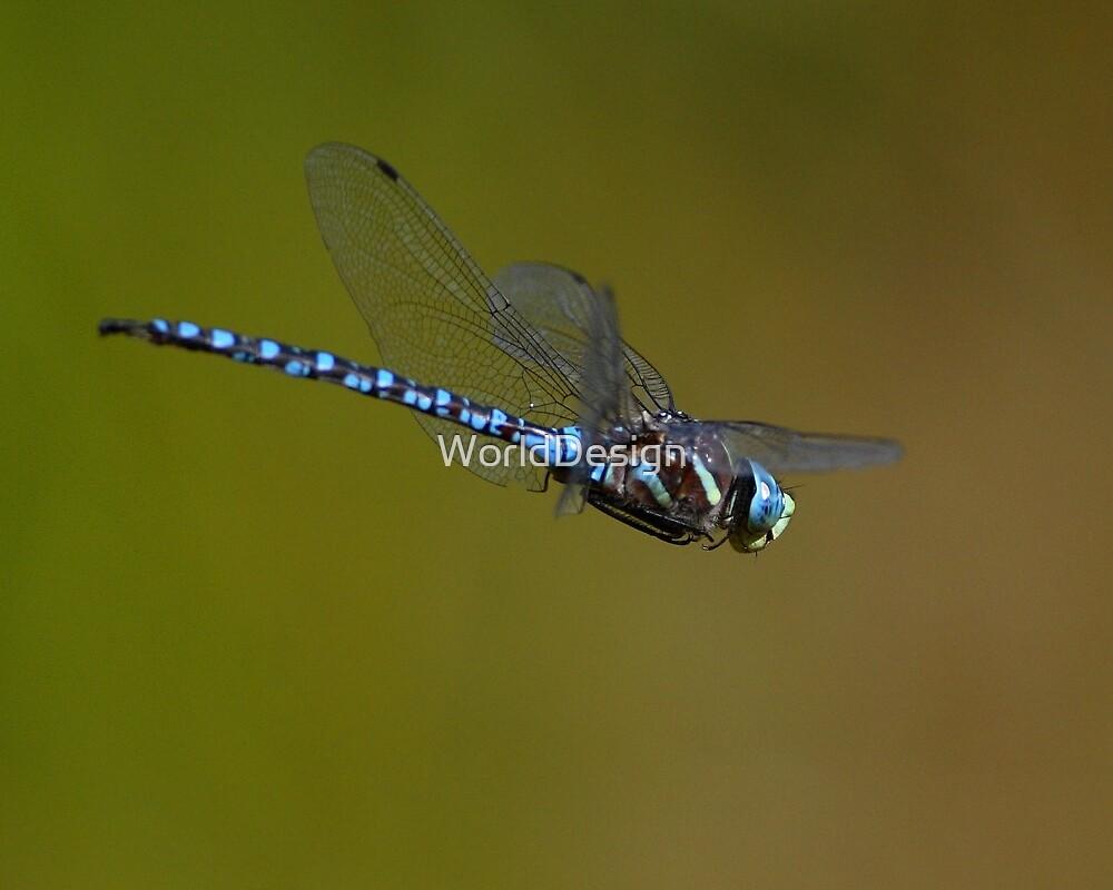 Dragonfly in Flight by WorldDesign