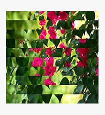 Pink Ribbon of Flowers Photographic Print
