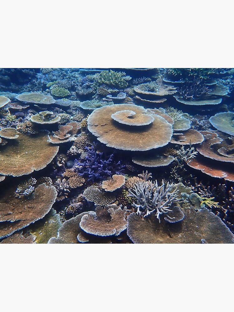 Bandjin Reefs III by neoniphon