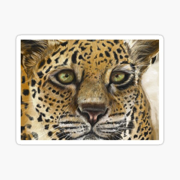 Leopard, Staying Focused  Sticker