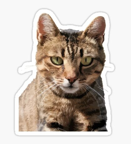 Portrait Of A Cute Tabby Cat With Direct Eye Contact Isolated Sticker