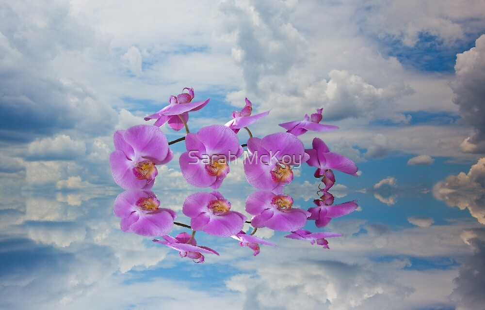 Orchid Sky by Sarah McKoy