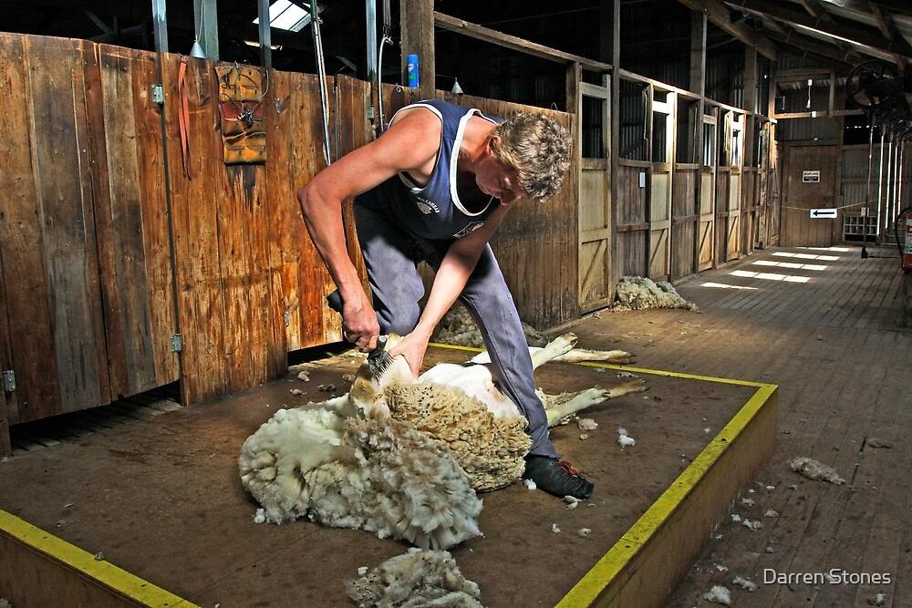 Sheep shearing at Shear Outback by Darren Stones