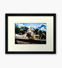Product Placement Framed Print