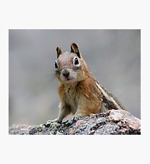 Ground Squirrel on Stage Photographic Print