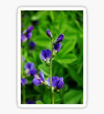 Violet Blue Sticker