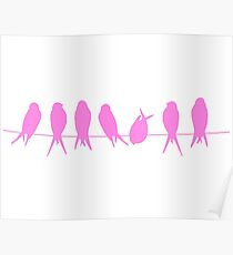 Pink Song birds Poster