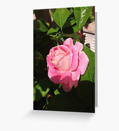 Pink Rose after the Rain Greeting Card
