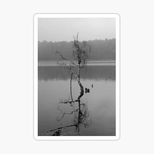 Tree in the Water Sticker