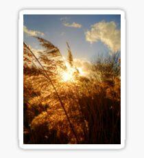 Marsh Sunset Sticker