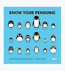 Know Your Penguins Photographic Print