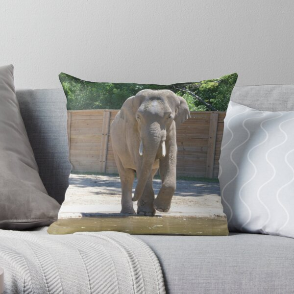 Asian Elephant - Beco Throw Pillow