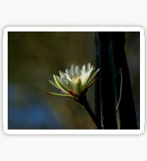 Kenya Cactus Flower Sticker