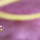 Pumpkin Droplets by iltby