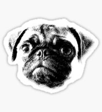 Tough Life Pug Sticker