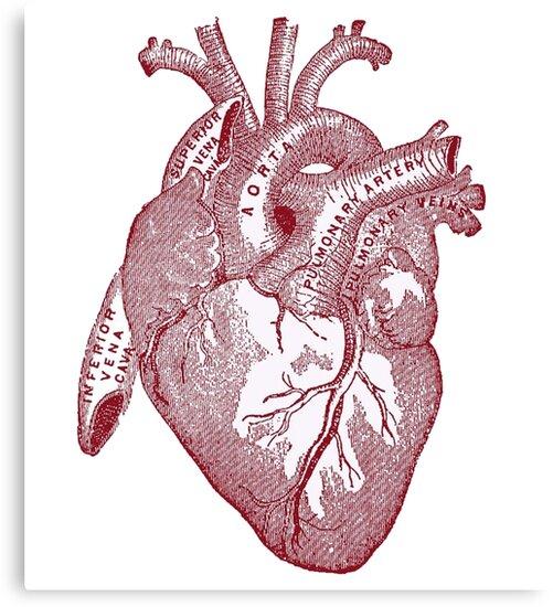 Lienzos «corazón anatómico» de thedeathcats | Redbubble