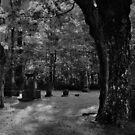 The Dark Place by Scott Mitchell