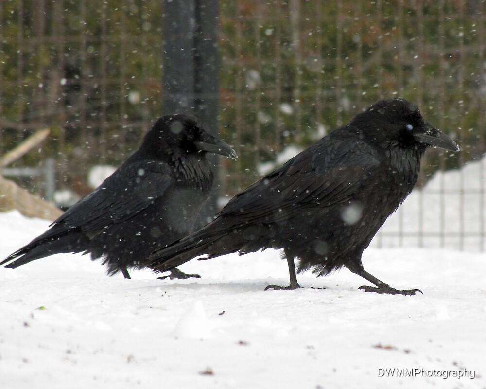 Ravens' Snow Stroll by DWMMPhotography