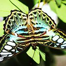 Turquoise blue, white & black butterfly by airdrie