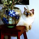 Ornamental Cat. Molly thinks she is part of the furniture. by ronsphotos