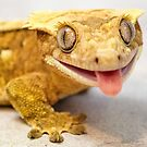 MALE CRESTED GECKO by CRYROLFE