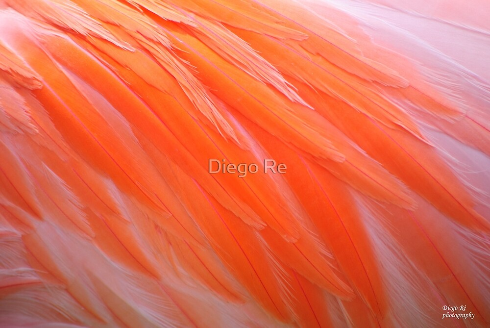 Flamingo Feathers by Diego Re