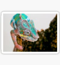 PANTHER CHAMELEON Sticker