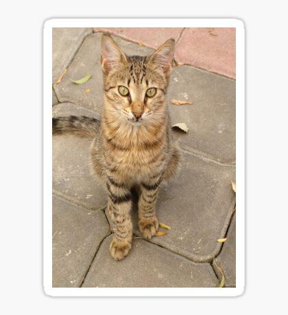Cute Tabby Street Cat Sticker