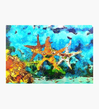 A Group of Asteroidea Starfish Photographic Print