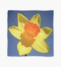 Yellow and Orange Colored Daffodil Close Up Scarf