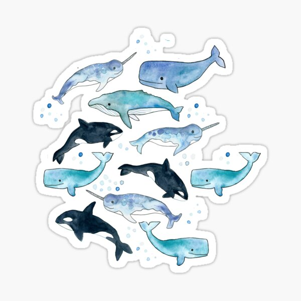Whales, Orcas & Narwhals Sticker