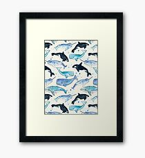 Whales, Orcas & Narwhals Framed Print