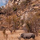 White Rhinoceros below a koppie, Kruger National Park by Erik Schlogl
