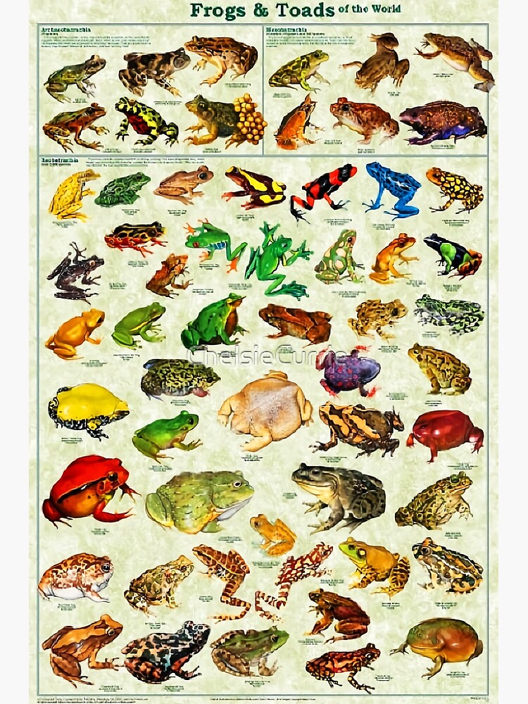 Most Relevant Frogs & Toads of The World Poster by ChelsieCurrie