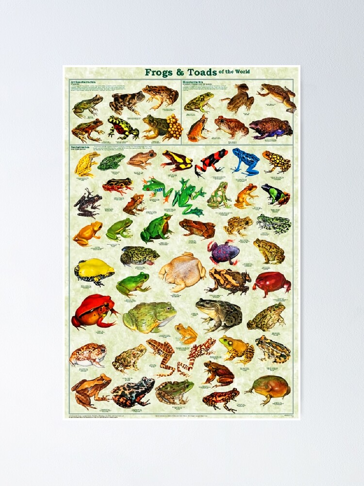 Alternate view of Most Relevant Frogs & Toads of The World Poster Poster