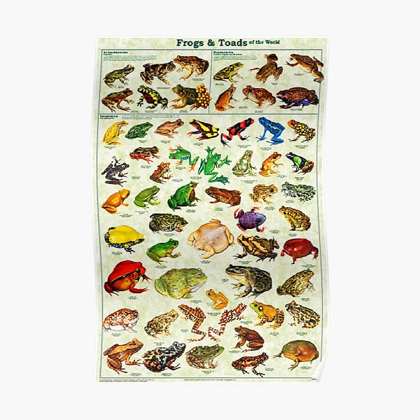 Most Relevant Frogs & Toads of The World Poster Poster