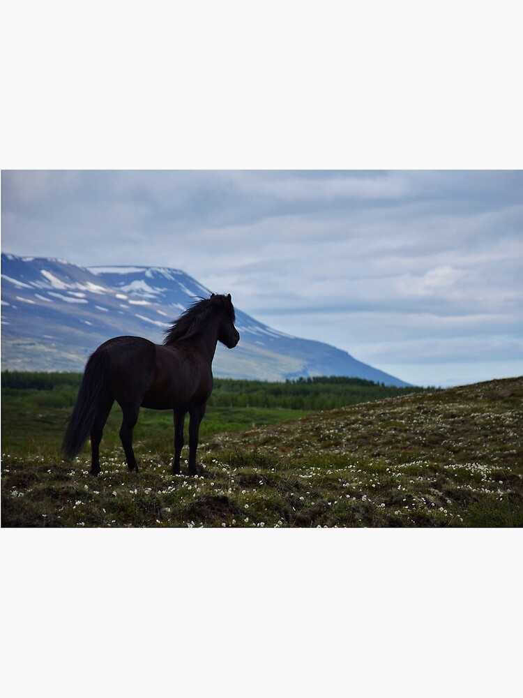 Icelandic horse looking out over his summer field by elisainiceland