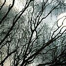 Winter Sun  by Kasia-D