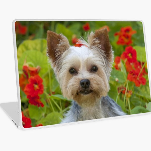 Yorkshire Terrier With Flowers Laptop Skin